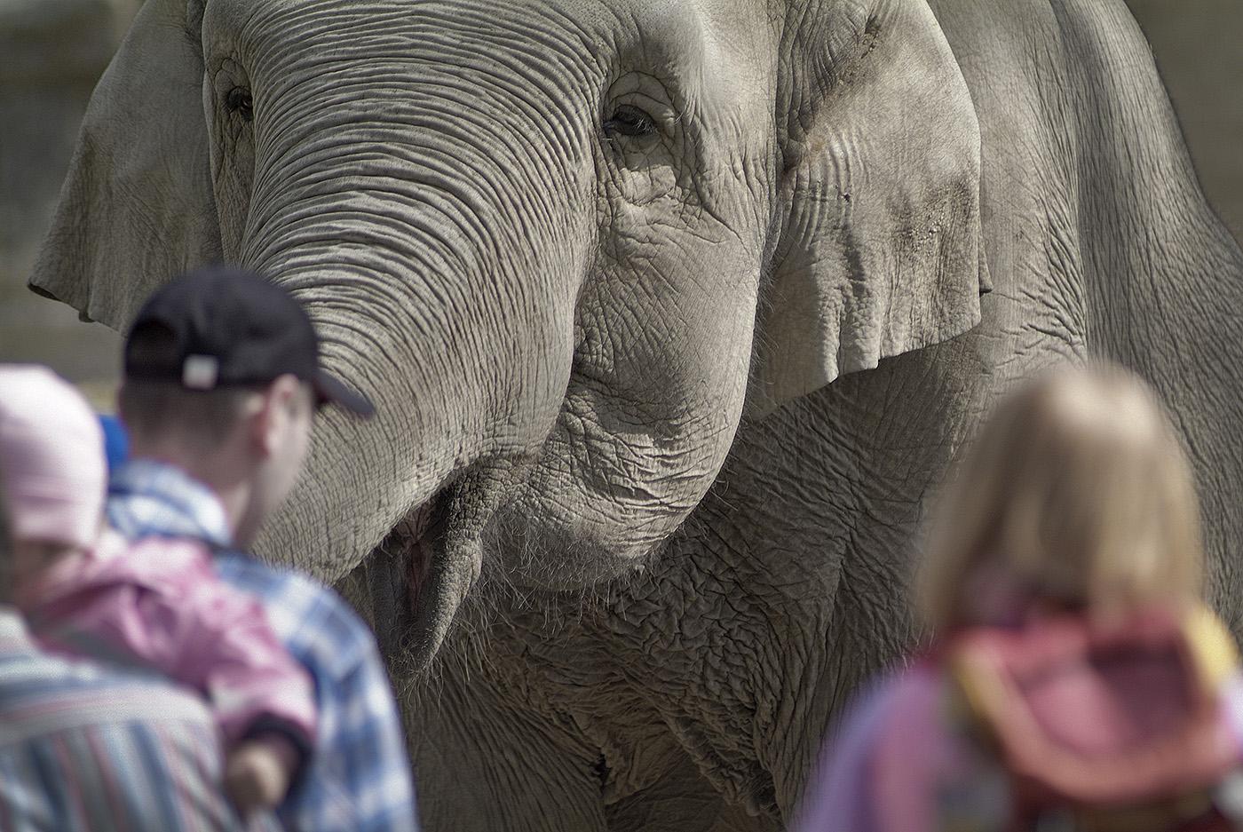 Elefanten-Gehege in Hagenbecks Tierpark